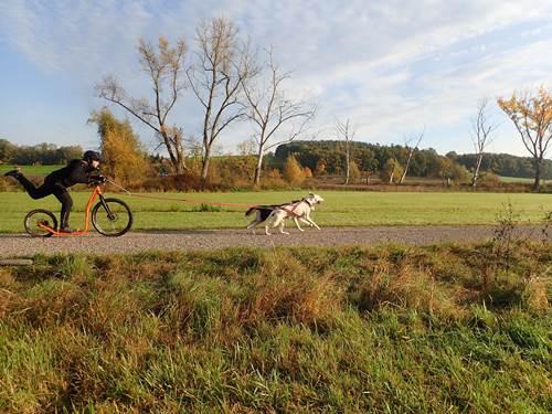 Zughundesport Schnupper-Wochenend-Kurs
