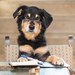 Imagebild - Hund mit Brille