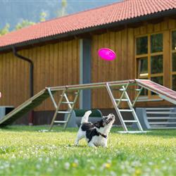 Frau mit Hund beim Frisbee spielen - Hundesporthotel mit Aussenplatz