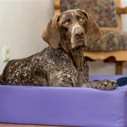 Hund im Hundebett in Ferienwohnung im Hundehotel Wolf