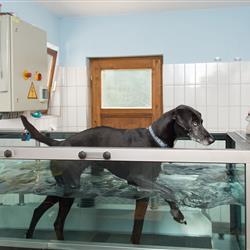Hund auf Unterwasserlaufband im Hundehotel Wolf