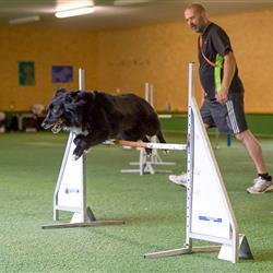 Hund bei Sprung über eine Stangenhürde - Hundesportseminare in Bayern