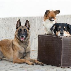 Imagebild Hunde mit Koffer
