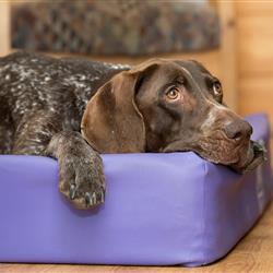 Hund im Hundebett - Ferienwohnungen im Hundehotel Wolf