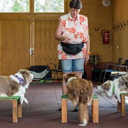 Hundeseminar-1