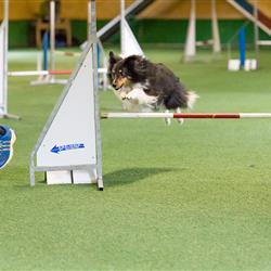 Hundeseminar-5