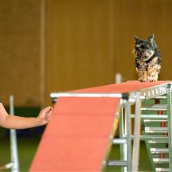 Hundeseminar-6
