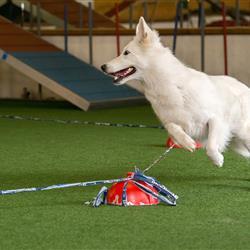 Hundetrainer-4