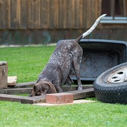 Hund beim Crossdogging - Hundeseminare in Bayern