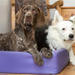 Hunde im Hundebett in der Ferienwohnung im Hundehotel Wolf